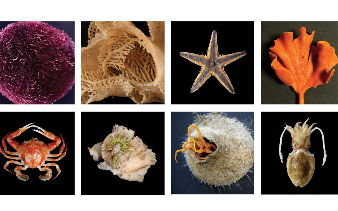 Marine biologists to launch one of a kind book on SA's marine invertebrates