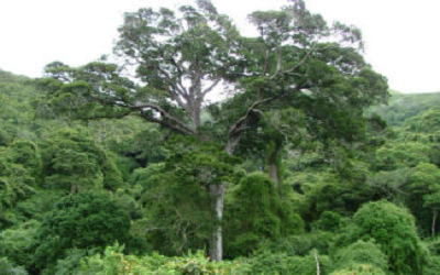 'Hidden' diversity uncovered in FBIP Eastern Cape forest project