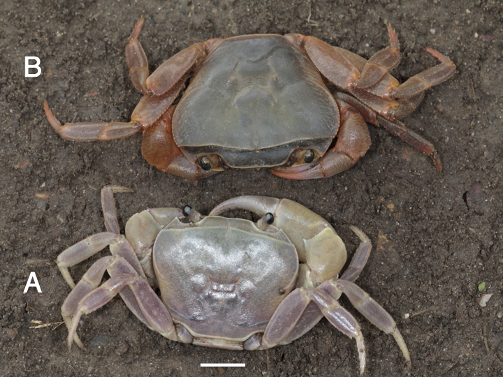 New crab species discovered in Eastern Cape 'forgotten' forests