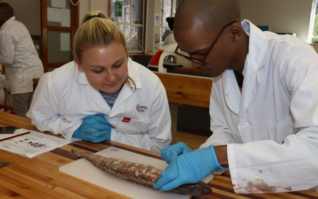 Marine parasite diversity workshop a first for Africa