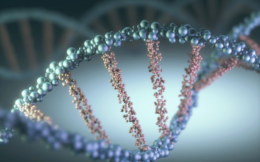MSc Bursary: Stellenbosch University Genetics Department