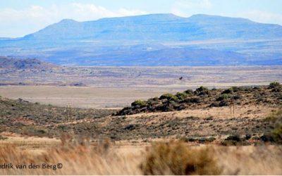 'Poorly explored' Stormberg  gets FBIP botanical data boost