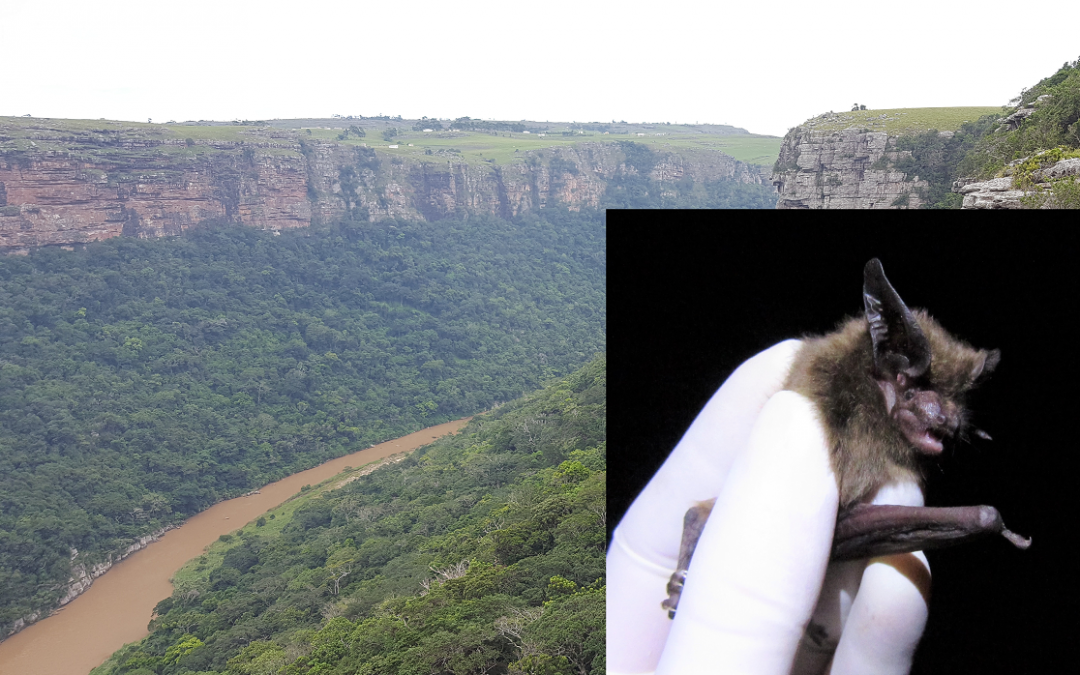 Stable Eastern Cape forests shielded bats from icy extermination