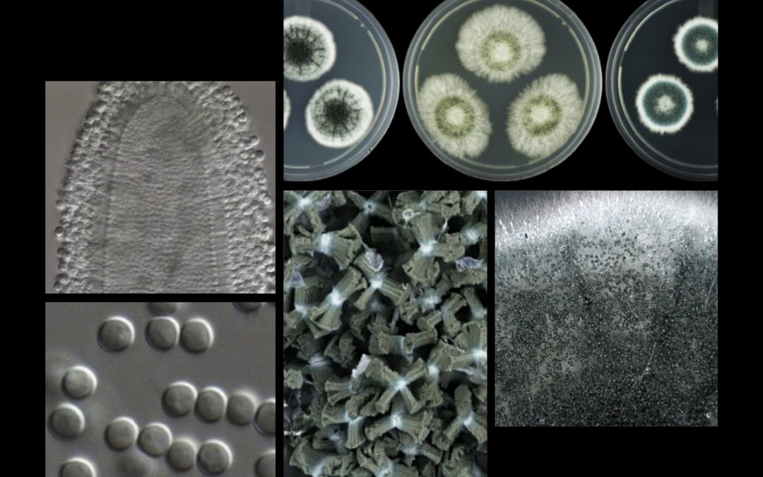 Light shed on the dark territory of fungal diversity with 7 new species to science